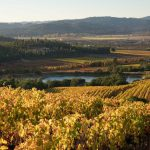 Kingston Family Vineyards Wine Tasting: A Private Tasting Event for PCNC, PANYC and PANE